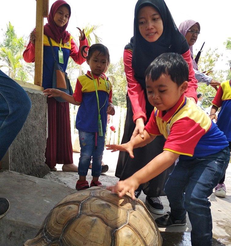 Memberi makan kura-kura