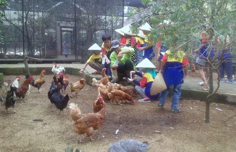 Memberi makan ayam