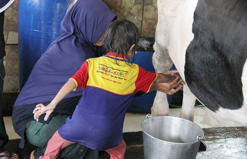 Memerah susu sapi