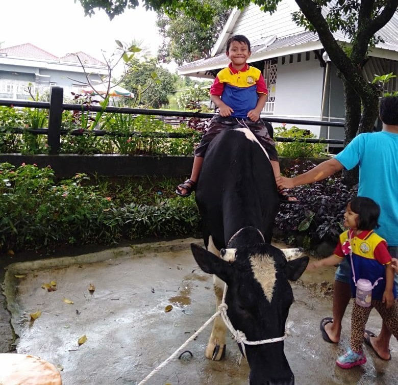 Coba lihat aku naik sapi lho.